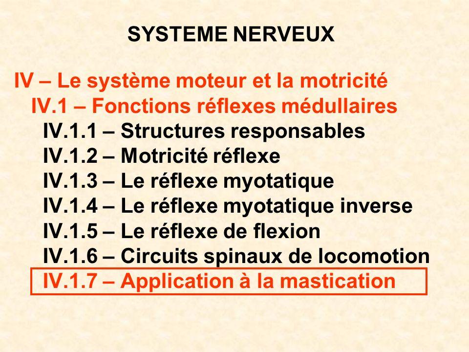 SYSTEME NERVEUX IV – Le système moteur et la motricité IV.1 – Fonctions réflexes médullaires IV.1.1 – Structures responsables IV.1.2 – Motricité réfle