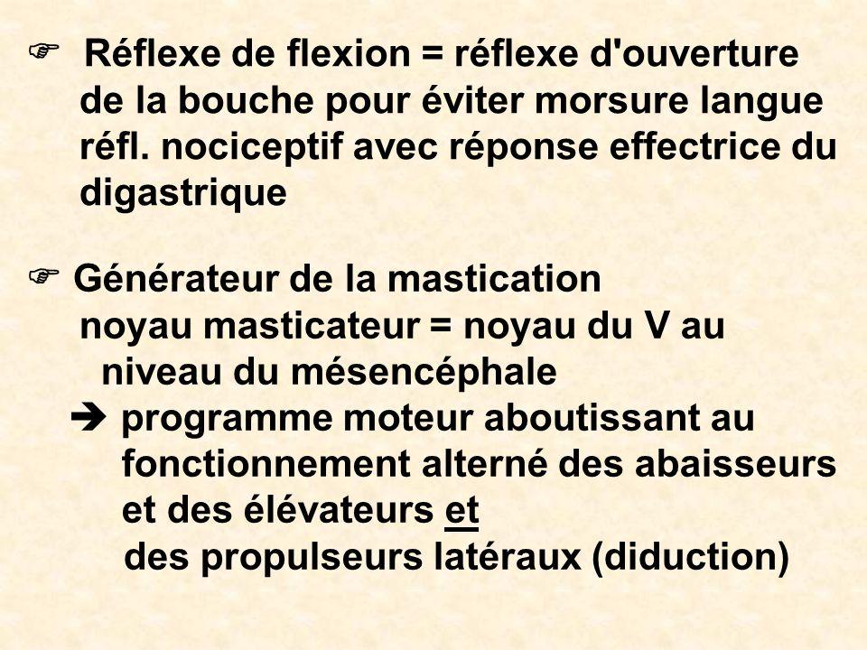 Réflexe de flexion = réflexe d'ouverture de la bouche pour éviter morsure langue réfl. nociceptif avec réponse effectrice du digastrique Générateur de