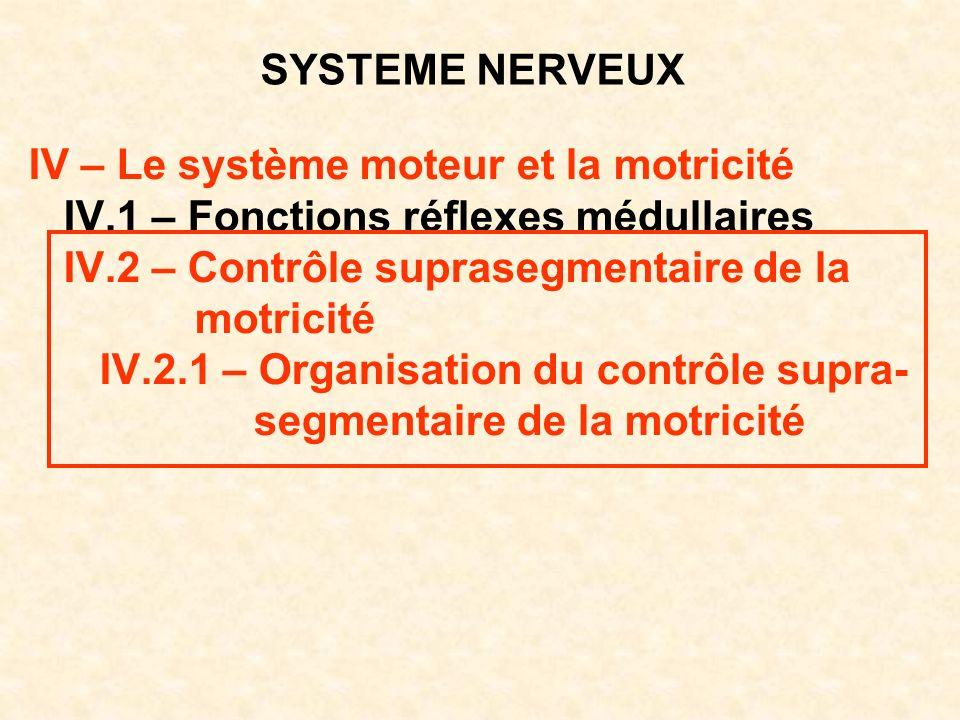 SYSTEME NERVEUX IV – Le système moteur et la motricité IV.1 – Fonctions réflexes médullaires IV.2 – Contrôle suprasegmentaire de la motricité IV.2.1 –
