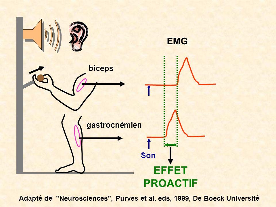 EMG gastrocnémien biceps Son EFFET PROACTIF Adapté de