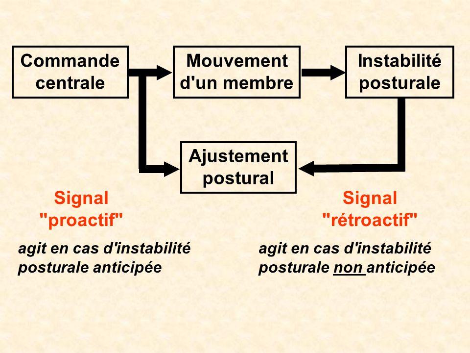 Commande centrale Mouvement d'un membre Instabilité posturale Ajustement postural Signal