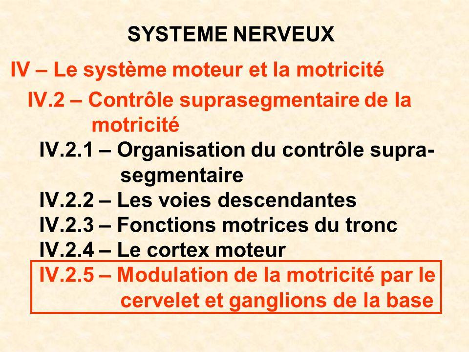 SYSTEME NERVEUX IV – Le système moteur et la motricité IV.2 – Contrôle suprasegmentaire de la motricité IV.2.1 – Organisation du contrôle supra- segme