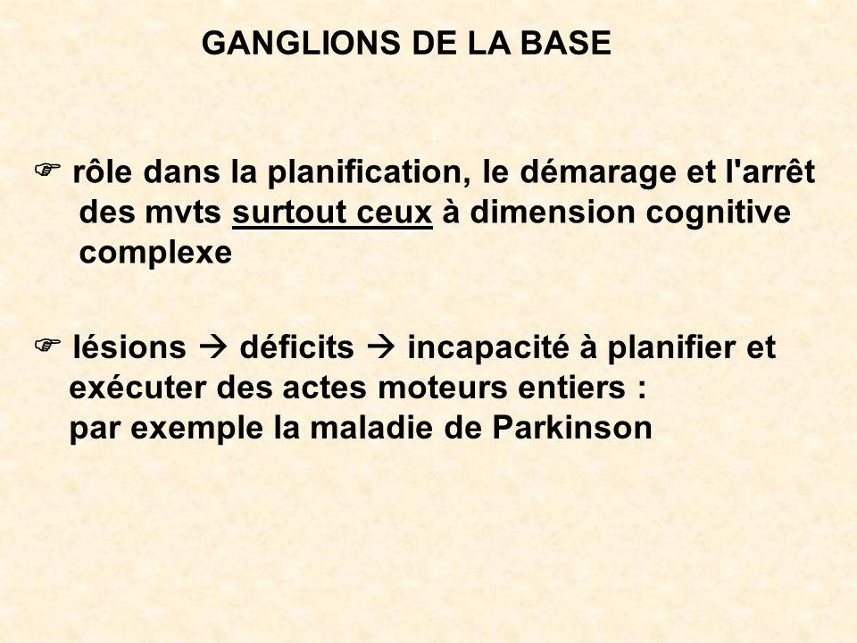 GANGLIONS DE LA BASE rôle dans la planification, le démarage et l'arrêt surtout ceux des mvts surtout ceux à dimension cognitive complexe lésions défi