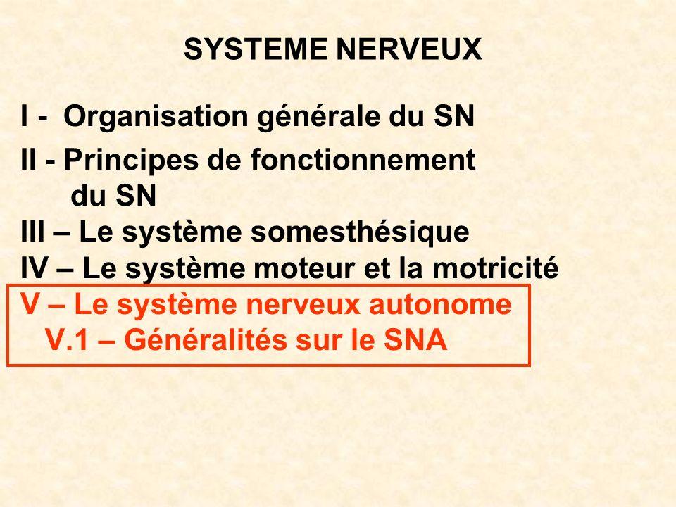 SYSTEME NERVEUX I - Organisation générale du SN II - Principes de fonctionnement du SN III – Le système somesthésique IV – Le système moteur et la mot