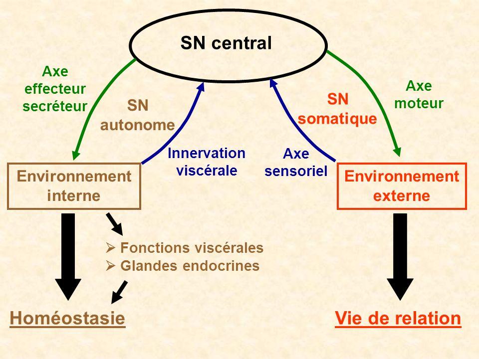 SN central Environnement externe Environnement interne Axe effecteur secréteur Axe moteur Innervation viscérale SN somatique SN autonome Vie de relati