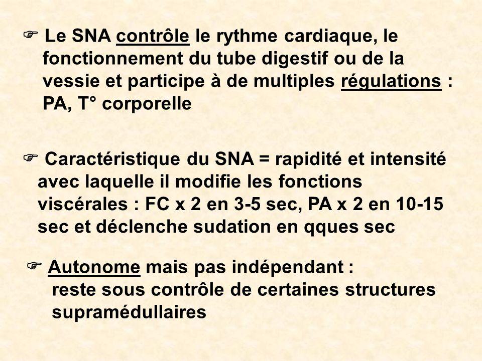 Le SNA contrôle le rythme cardiaque, le fonctionnement du tube digestif ou de la vessie et participe à de multiples régulations : PA, T° corporelle Ca