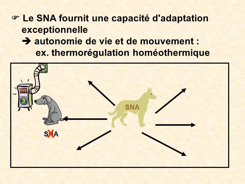 Le SNA fournit une capacité d'adaptation exceptionnelle autonomie de vie et de mouvement : ex. thermorégulation homéothermique SNA X
