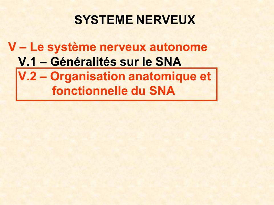 SYSTEME NERVEUX V – Le système nerveux autonome V.1 – Généralités sur le SNA V.2 – Organisation anatomique et fonctionnelle du SNA