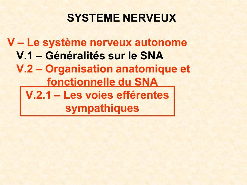 SYSTEME NERVEUX V – Le système nerveux autonome V.1 – Généralités sur le SNA V.2 – Organisation anatomique et fonctionnelle du SNA V.2.1 – Les voies e