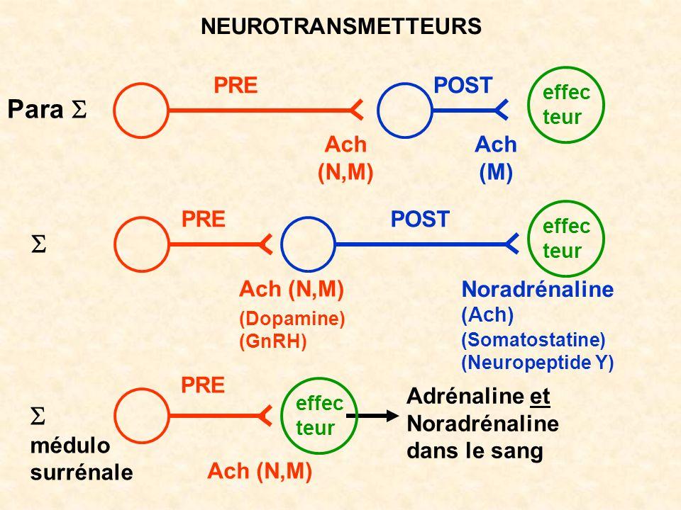 NEUROTRANSMETTEURS effec teur PREPOST PRE POST Para médulo surrénale Ach (N,M) Ach (M) Ach (N,M) Noradrénaline Adrénaline et Noradrénaline dans le san