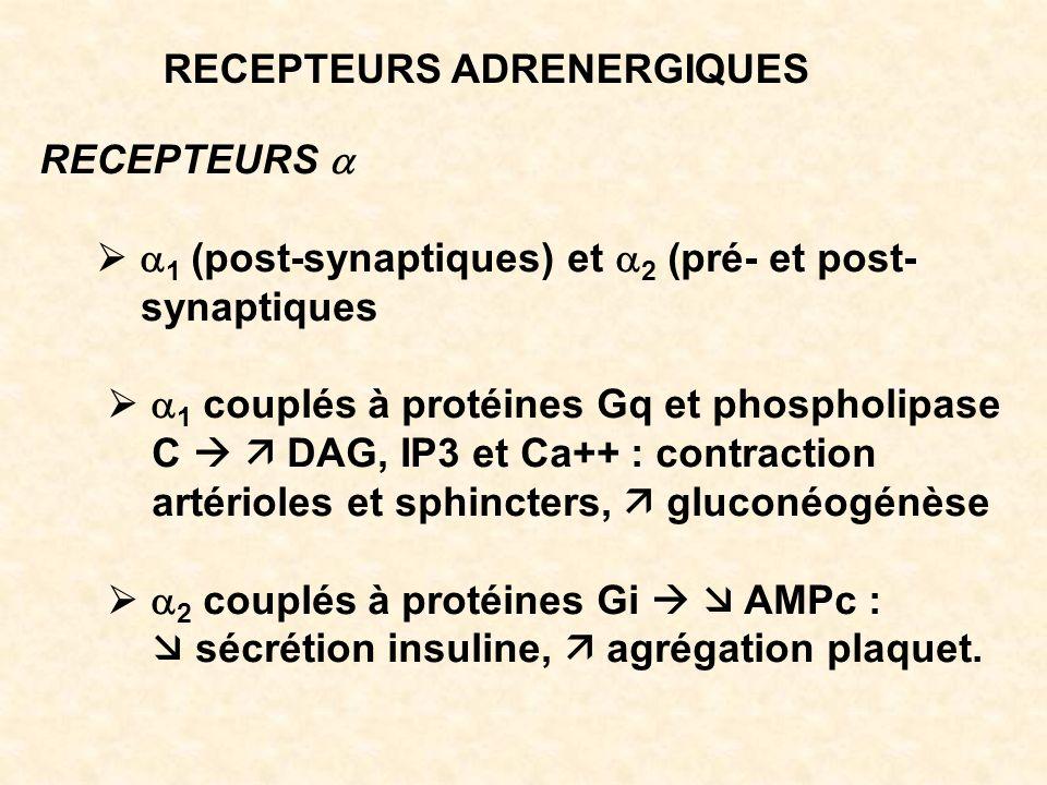 RECEPTEURS ADRENERGIQUES RECEPTEURS 1 (post-synaptiques) et 2 (pré- et post- synaptiques 1 couplés à protéines Gq et phospholipase C DAG, IP3 et Ca++