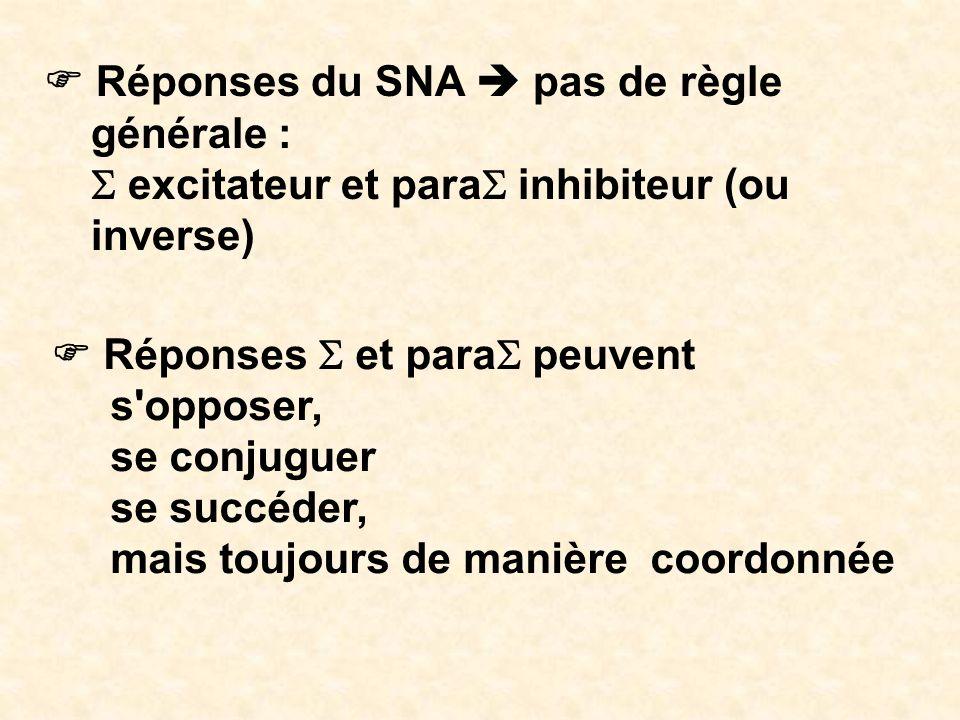 Réponses du SNA pas de règle générale : excitateur et para inhibiteur (ou inverse) Réponses et para peuvent s'opposer, se conjuguer se succéder, mais