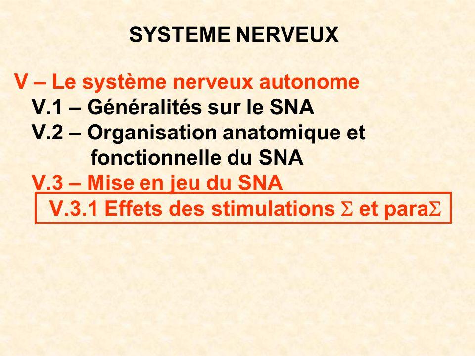 SYSTEME NERVEUX V – Le système nerveux autonome V.1 – Généralités sur le SNA V.2 – Organisation anatomique et fonctionnelle du SNA V.3 – Mise en jeu d