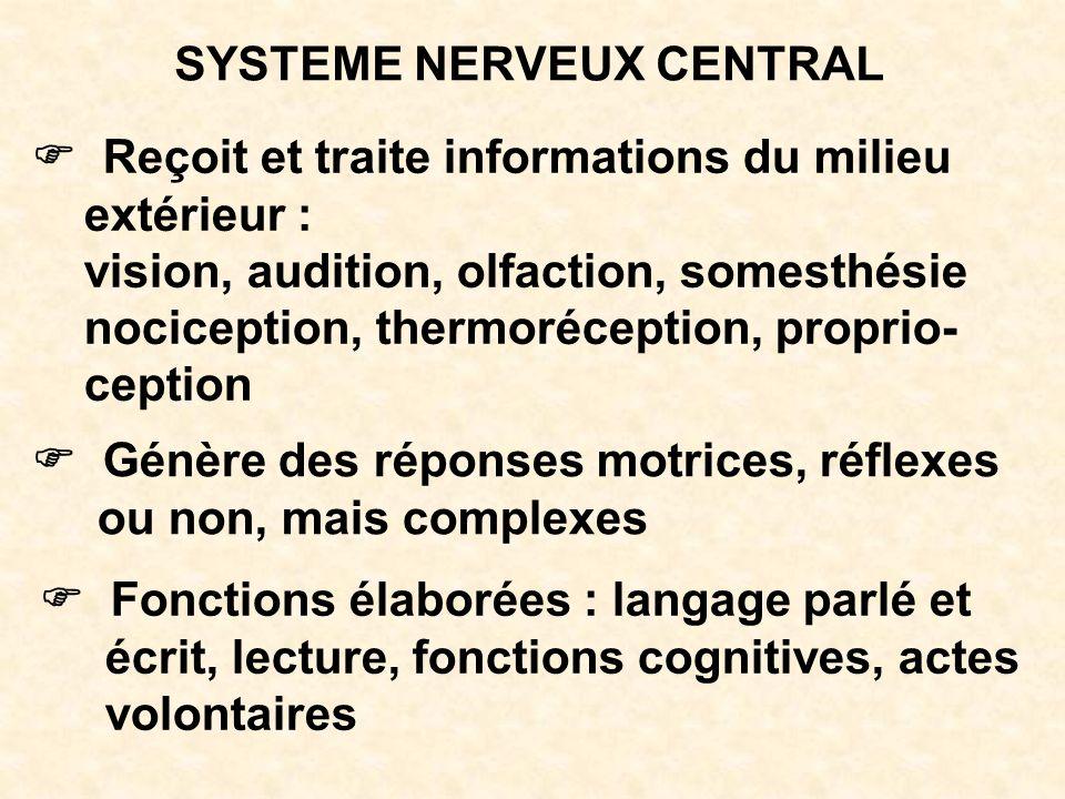 SYSTEME NERVEUX CENTRAL Reçoit et traite informations du milieu extérieur : vision, audition, olfaction, somesthésie nociception, thermoréception, pro