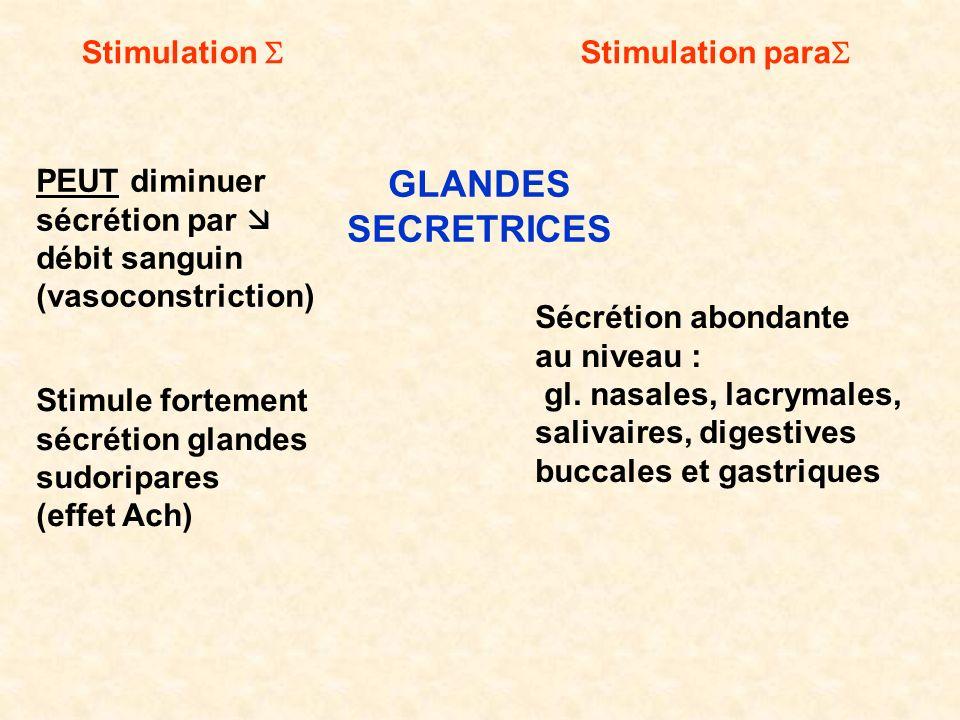 Stimulation Stimulation para PEUT diminuer sécrétion par débit sanguin (vasoconstriction) Sécrétion abondante au niveau : gl. nasales, lacrymales, sal