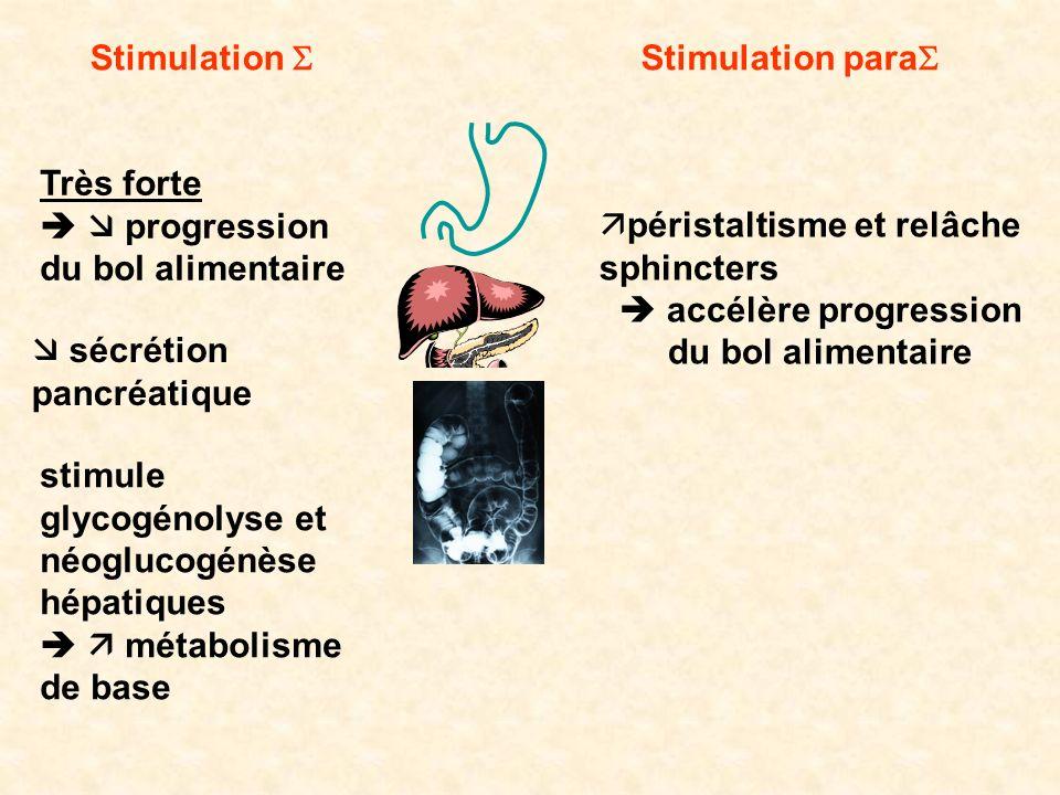 Stimulation Stimulation para Très forte progression du bol alimentaire péristaltisme et relâche sphincters accélère progression du bol alimentaire séc