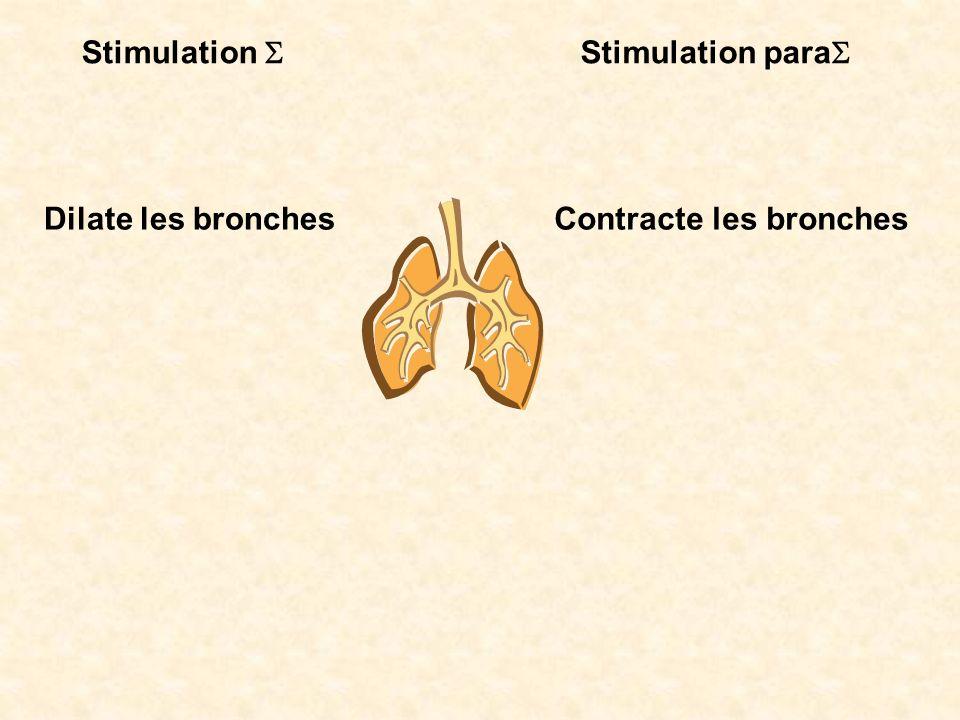 Stimulation Stimulation para Dilate les bronchesContracte les bronches