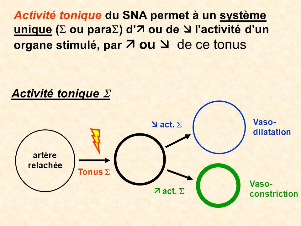 Activité tonique du SNA permet à un système unique ( ou para ) d' ou de l'activité d'un organe stimulé, par ou de ce tonus Activité tonique Vaso- cons