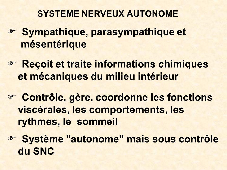 SYSTEME NERVEUX AUTONOME Sympathique, parasympathique et mésentérique Reçoit et traite informations chimiques et mécaniques du milieu intérieur Contrô