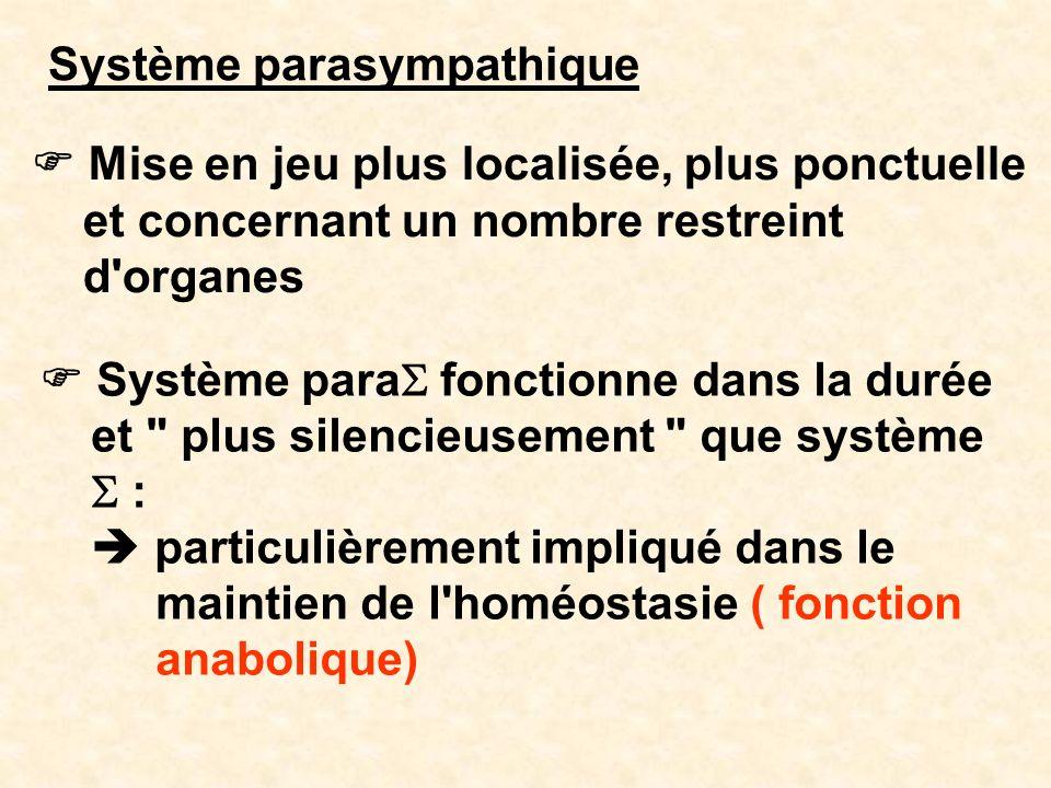 Système parasympathique Mise en jeu plus localisée, plus ponctuelle et concernant un nombre restreint d'organes Système para fonctionne dans la durée