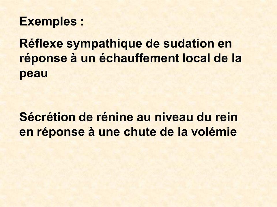 Exemples : Réflexe sympathique de sudation en réponse à un échauffement local de la peau Sécrétion de rénine au niveau du rein en réponse à une chute