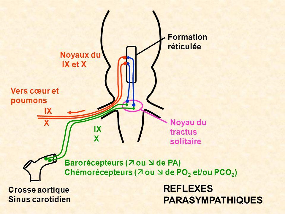 Vers cœur et poumons IX X Formation réticulée Noyau du tractus solitaire IX X Barorécepteurs ( ou de PA) Chémorécepteurs ( ou de PO 2 et/ou PCO 2 ) Cr