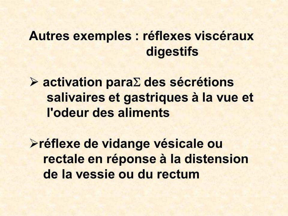 Autres exemples : réflexes viscéraux digestifs activation para des sécrétions salivaires et gastriques à la vue et l'odeur des aliments réflexe de vid