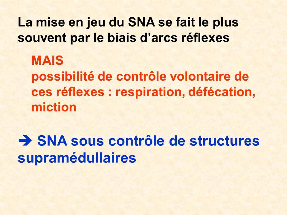 La mise en jeu du SNA se fait le plus souvent par le biais darcs réflexes MAIS possibilité de contrôle volontaire de ces réflexes : respiration, déféc