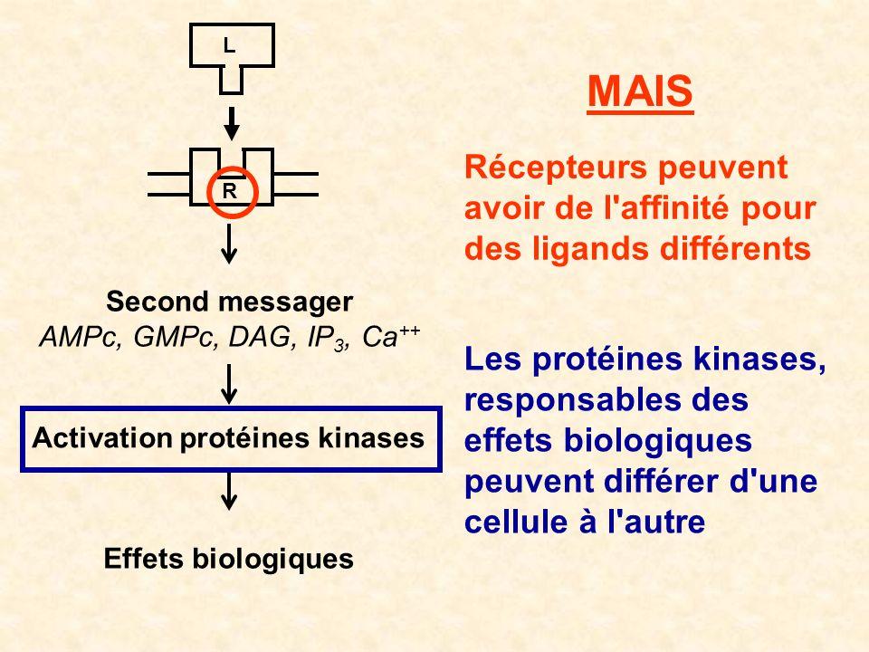 R L Second messager AMPc, GMPc, DAG, IP 3, Ca ++ Activation protéines kinases Effets biologiques MAIS Récepteurs peuvent avoir de l'affinité pour des