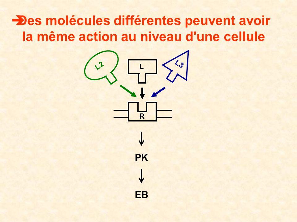 PK EB Des molécules différentes peuvent avoir la même action au niveau d'une cellule L2 L3 R L