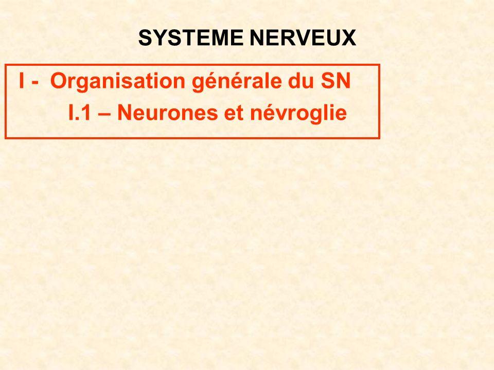 SYSTEME NERVEUX I - Organisation générale du SN I.1 – Neurones et névroglie