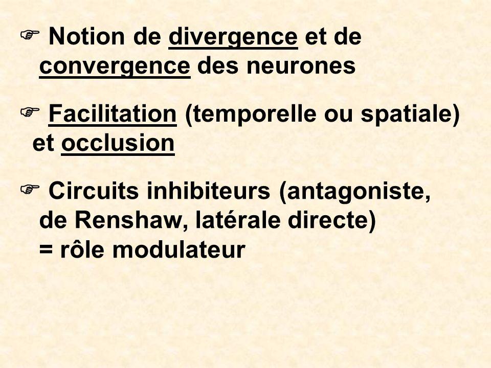 Notion de divergence et de convergence des neurones Facilitation (temporelle ou spatiale) et occlusion Circuits inhibiteurs (antagoniste, de Renshaw,