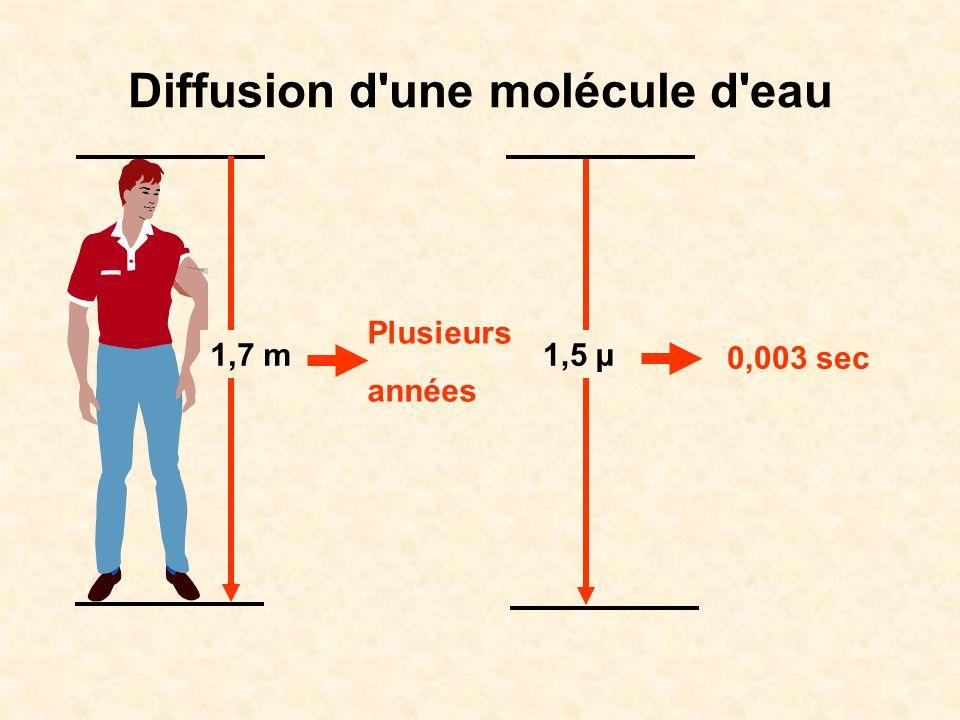 Diffusion d une molécule d O 2 environnement 100% O 2 1 cm0,7 mm7 µm saturation du cylindre en O 2 obtenue en : 11 000 sec ~ 3 heures 54 sec < 1 min 0,0054 sec 5,4 ms