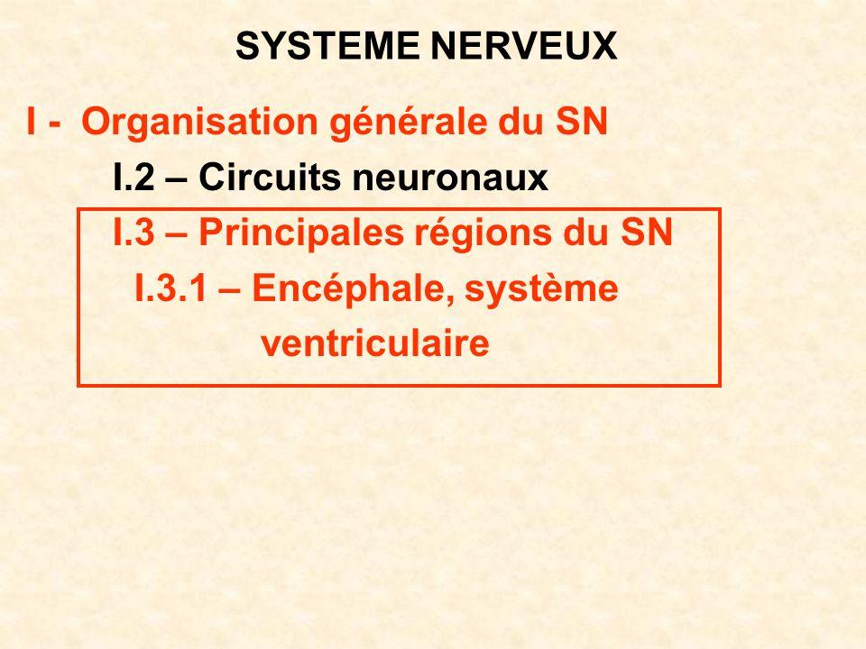 SYSTEME NERVEUX I - Organisation générale du SN I.2 – Circuits neuronaux I.3 – Principales régions du SN I.3.1 – Encéphale, système ventriculaire