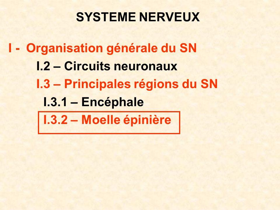 SYSTEME NERVEUX I - Organisation générale du SN I.2 – Circuits neuronaux I.3 – Principales régions du SN I.3.1 – Encéphale I.3.2 – Moelle épinière