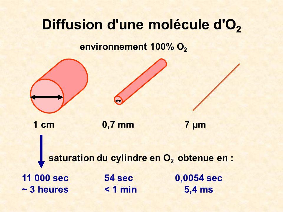 Diffusion d'une molécule d'O 2 environnement 100% O 2 1 cm0,7 mm7 µm saturation du cylindre en O 2 obtenue en : 11 000 sec ~ 3 heures 54 sec < 1 min 0