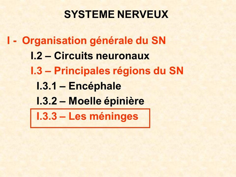 SYSTEME NERVEUX I - Organisation générale du SN I.2 – Circuits neuronaux I.3 – Principales régions du SN I.3.1 – Encéphale I.3.2 – Moelle épinière I.3