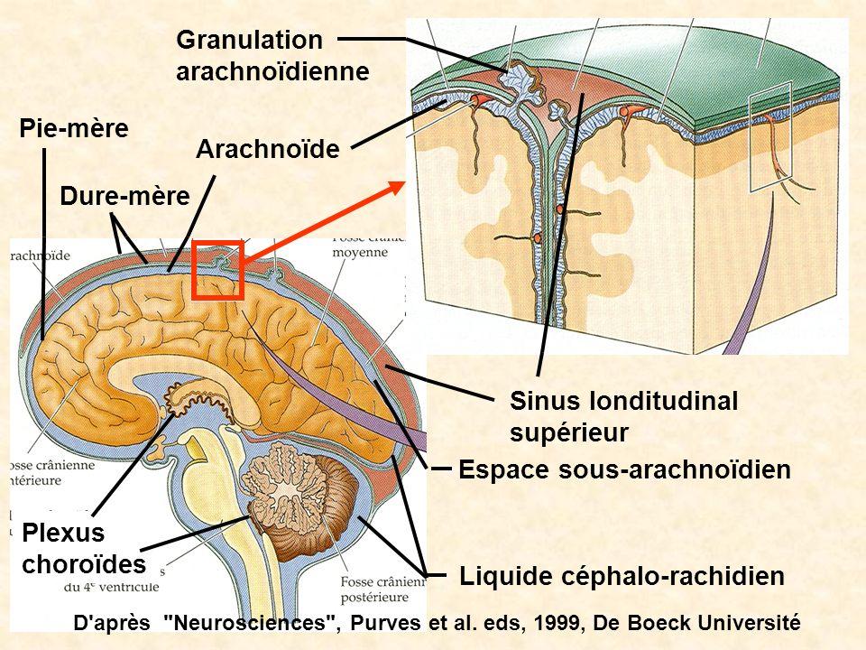 Plexus choroïdes Dure-mère Arachnoïde Pie-mère Granulation arachnoïdienne Sinus londitudinal supérieur Espace sous-arachnoïdien Liquide céphalo-rachid
