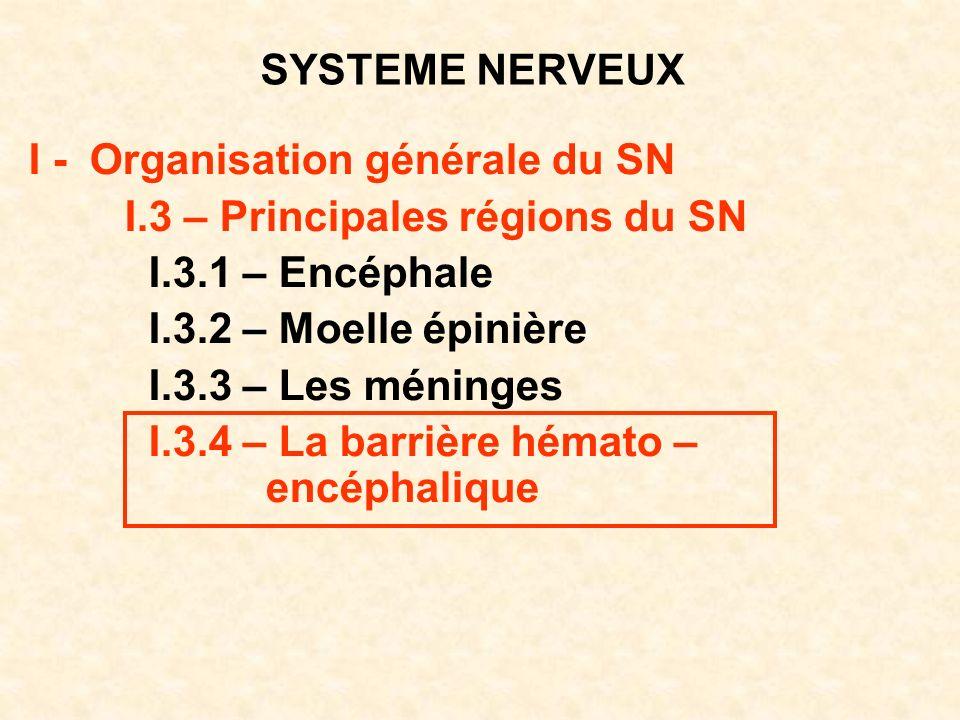 SYSTEME NERVEUX I - Organisation générale du SN I.3 – Principales régions du SN I.3.1 – Encéphale I.3.2 – Moelle épinière I.3.3 – Les méninges I.3.4 –