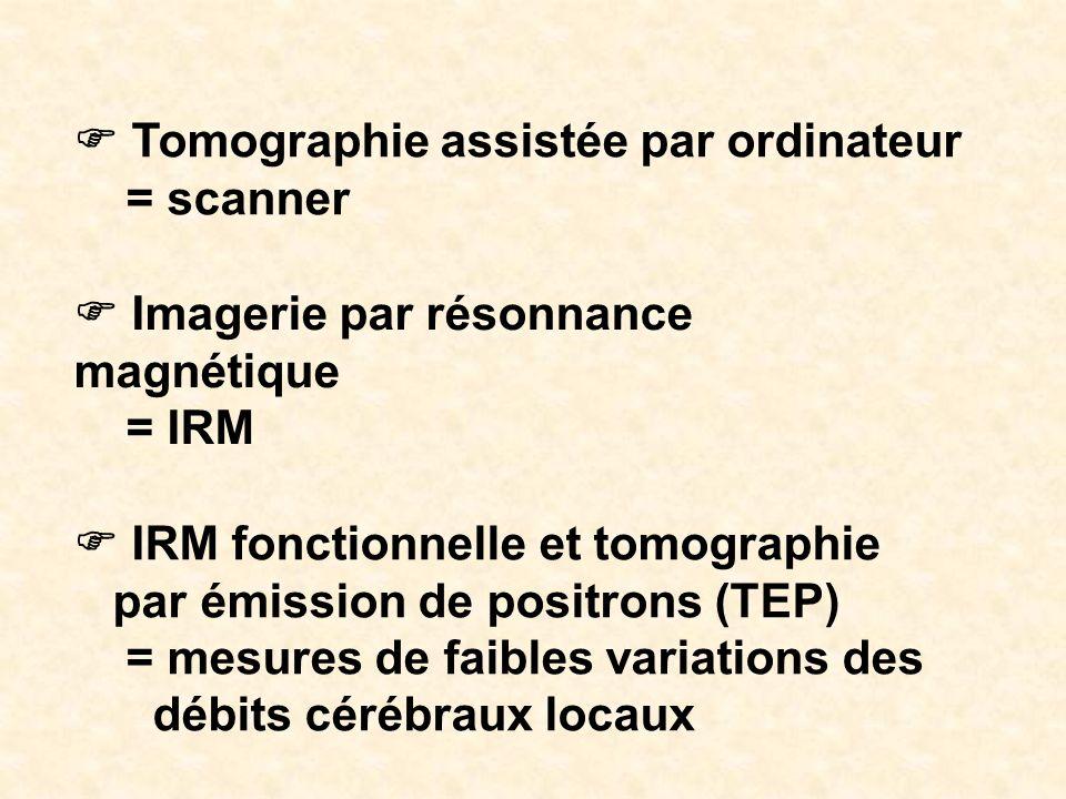 Tomographie assistée par ordinateur = scanner Imagerie par résonnance magnétique = IRM IRM fonctionnelle et tomographie par émission de positrons (TEP