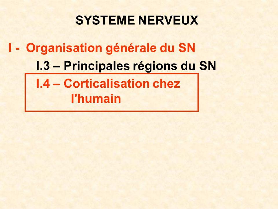 SYSTEME NERVEUX I - Organisation générale du SN I.3 – Principales régions du SN I.4 – Corticalisation chez l'humain