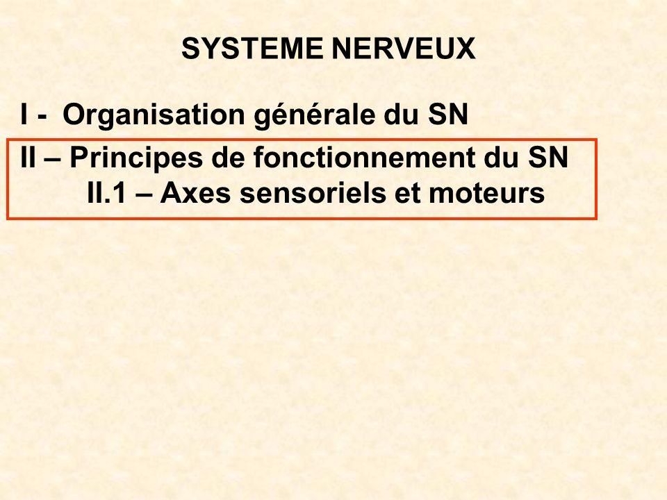 SYSTEME NERVEUX I - Organisation générale du SN II – Principes de fonctionnement du SN II.1 – Axes sensoriels et moteurs