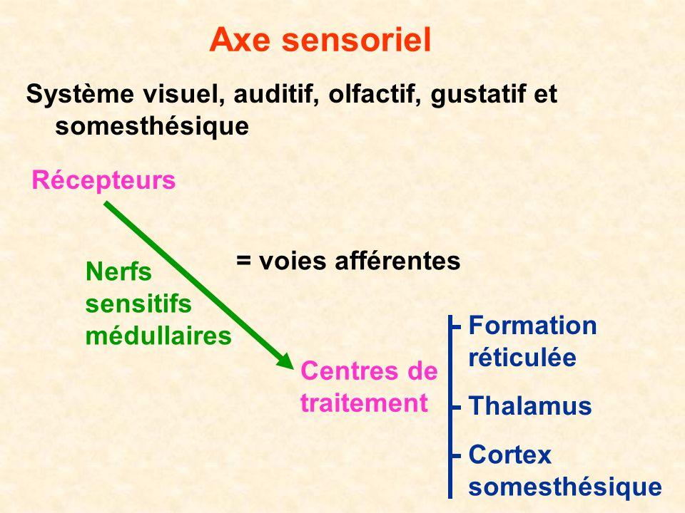 Axe sensoriel Système visuel, auditif, olfactif, gustatif et somesthésique Récepteurs Centres de traitement Cortex somesthésique Formation réticulée =