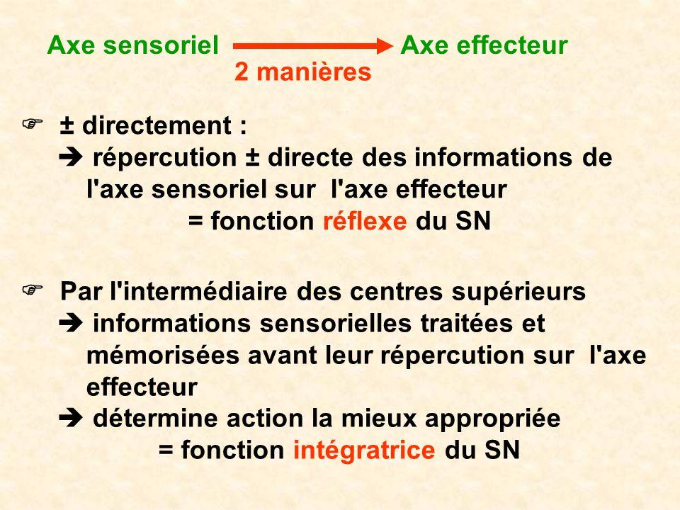 Axe sensoriel ± directement : répercution ± directe des informations de l'axe sensoriel sur l'axe effecteur = fonction réflexe du SN Axe effecteur 2 m