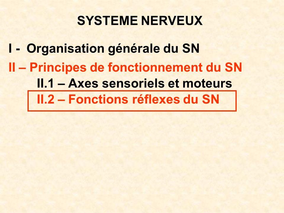 SYSTEME NERVEUX I - Organisation générale du SN II – Principes de fonctionnement du SN II.1 – Axes sensoriels et moteurs II.2 – Fonctions réflexes du