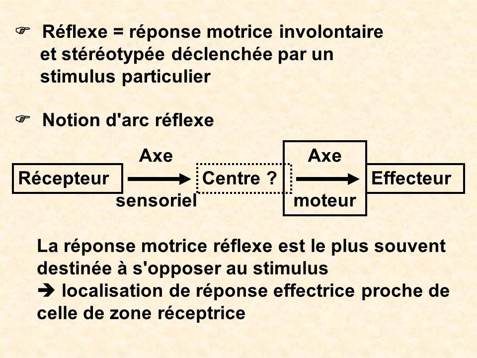 Réflexe = réponse motrice involontaire et stéréotypée déclenchée par un stimulus particulier Notion d'arc réflexe La réponse motrice réflexe est le pl