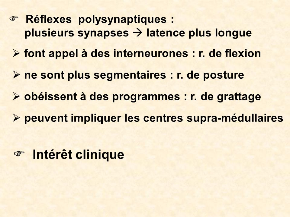 Réflexes polysynaptiques : plusieurs synapses latence plus longue Intérêt clinique font appel à des interneurones : r. de flexion ne sont plus segment
