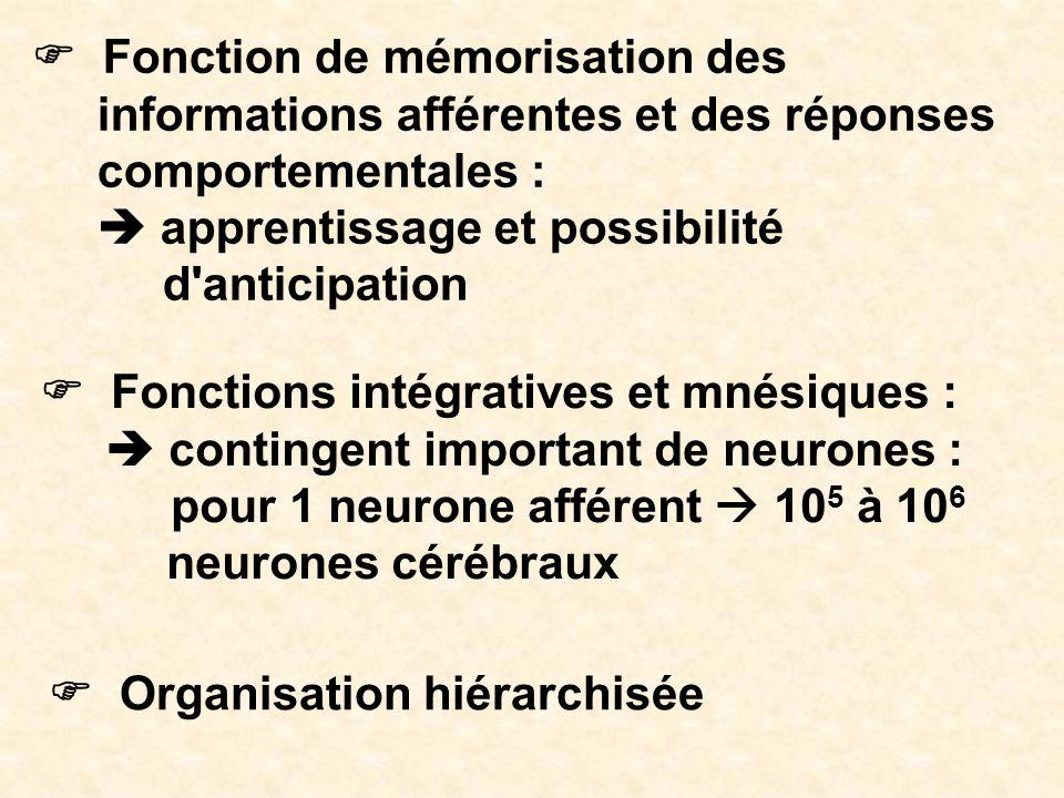 Fonction de mémorisation des informations afférentes et des réponses comportementales : apprentissage et possibilité d'anticipation Organisation hiéra