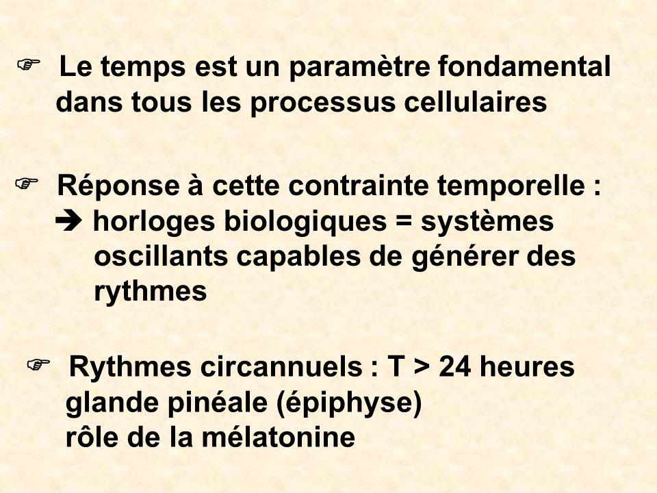 Le temps est un paramètre fondamental dans tous les processus cellulaires Réponse à cette contrainte temporelle : horloges biologiques = systèmes osci