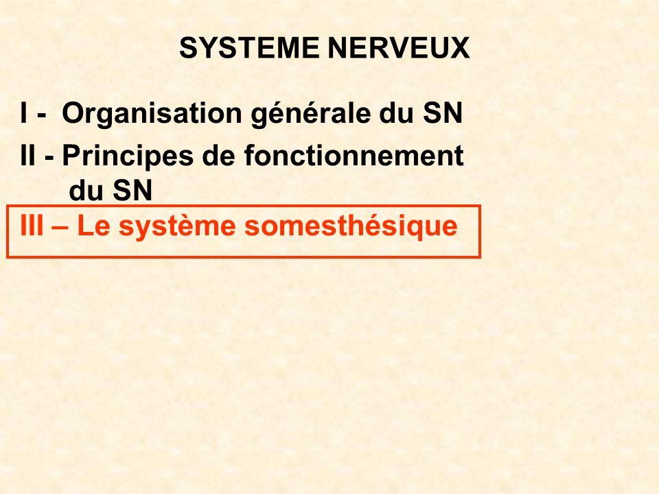 SYSTEME NERVEUX I - Organisation générale du SN II - Principes de fonctionnement du SN III – Le système somesthésique